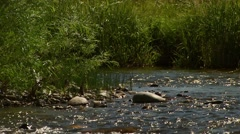 View of Gallatin River Stock Footage