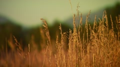 Close-up of grass Stock Footage