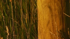 Close-up of wooden fence in meadow Stock Footage