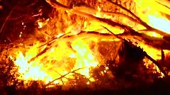 Burning Tree Stock Footage
