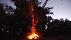 Burning Tree - stock footage