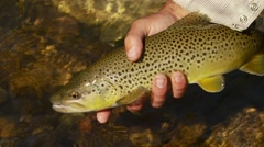 Flyfisher holding trout fish Stock Footage