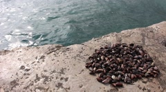 Live clams on the beach Stock Footage