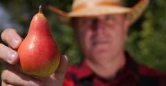 Farmer Man Showing Pear Fruit Close Up Agriculturist Male Check Harvest Orchard Stock Footage