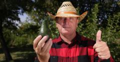 Happy Proud Farmer Man Showing Green Avocado Fruit Thumbs Up Good Result Harvest Stock Footage