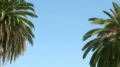 Close up two swaying palms tree against the blue sky Stock Footage