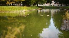 Pond near Branicki Palace in Bialystok, Stock Footage