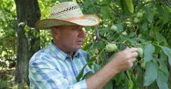 Nuts Tree Presentation Good Plant Fruit Orchard Farmer Talking Seasonal Farming Stock Footage