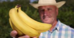 Stock Video Footage of Plantation Farmer Showing Bunch Ripe Bananas Fruits Man Checking Offer Close Up