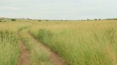 Beautiful two track dirt safari road Stock Footage