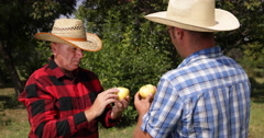 Farmers Talking Orchard Harvest Apple Fruits Quality Check Good Year Production Stock Footage