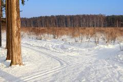Ski tracks in the winter forest - stock photo