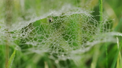 4K Cobweb covered in morning dew, shot on Red Epic Dragon - stock footage