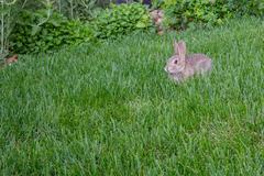 Bunny in tall grass Stock Photos