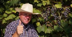 Winemaker Tasting Grapes Crop Check Ripe Level Quality Farmer Man Eat Grapevine Stock Footage
