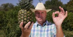Happy Cultivator Quality Check Farmer Man Ok Sign Gesture Exotic Pineapple Fruit - stock footage