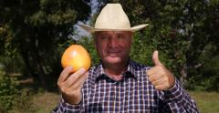 Farmer Check Grapefruit Showing Great Results Fruits Happy Man Thumbs Up Gesture Stock Footage