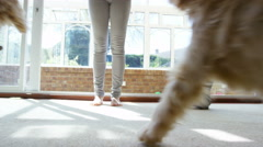 4K Young woman at home with 2 cute young puppies, working on obedience training - stock footage