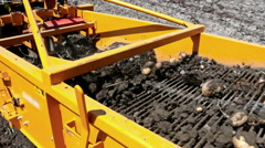 Quarrying of of raw potato out of the ground Stock Footage