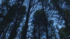 Trees tree forest nature twilight 4k Stock Footage