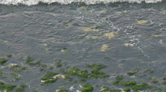 Lots of green weeds washed off by the waves Stock Footage