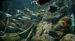 4k dream Tank fish tank aquarium Stock Footage