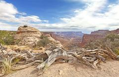 Dry trees in Canyonlands National Park, Island in the Sky, Utah, USA. Stock Photos