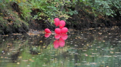 Red balloons in the pond in autumn Park - stock footage