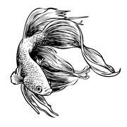 Stock Illustration of Betta splendens, Siamese fighting fish