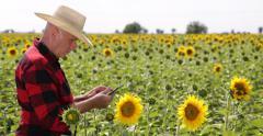 Farmer Walk Sunflower Crop Field Study Fertility Notes Touch Tablet Farmland Job Stock Footage