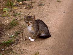 small kitty on walk by autumn - stock photo