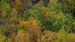 Autumn trees rustling - stock footage