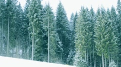 Snow falls on background of green fir trees in mountains - stock footage
