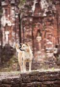 Dog outside the temple - stock photo