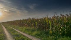 Corn Field and Dirt Road vanishing into horizon sunset, 4K UHD - stock footage