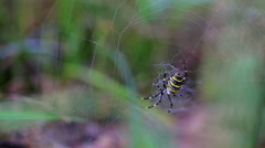 Spider, black and yellow Stock Footage