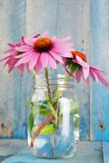 Pink echinacea flowers - vertical bright - stock photo