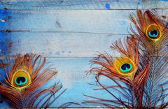 Three peacock feathers on wood - stock photo