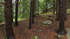 Personal perspective of walking on a path in the mountain forest. - stock footage