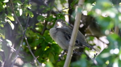Little bird resting on the branch Stock Footage