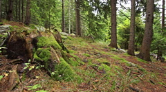 Personal perspective of walking on a path in the mountain forest. Stock Footage