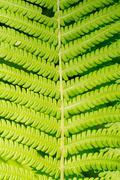 green fern leaves symmetrical background - stock photo