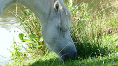 White horse eating grass Stock Footage