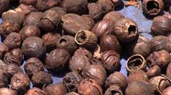 Drying Nutmeg on Siau Island 2 Stock Footage