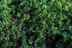 greenery - stock photo
