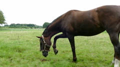 Horse eating grass in grassland Stock Footage