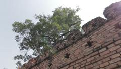 Ancient Thai Fort Castle Wall Trees Sky Lens Flare Brick City Street Hand Held Stock Footage