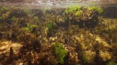 Solar rays penetrate underwater and illuminated spectacular algae Stock Footage