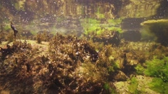 Underwater marine formations of algae and oxygen bubbles in slow motion Stock Footage