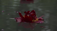 Burgundy Flowers Stock Footage